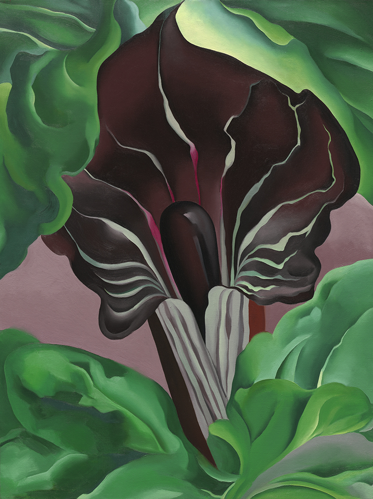Georgia Okeeffe Leaves of a Plant Stretched Canvas Print