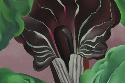 Jack-in-the-Pulpit painting