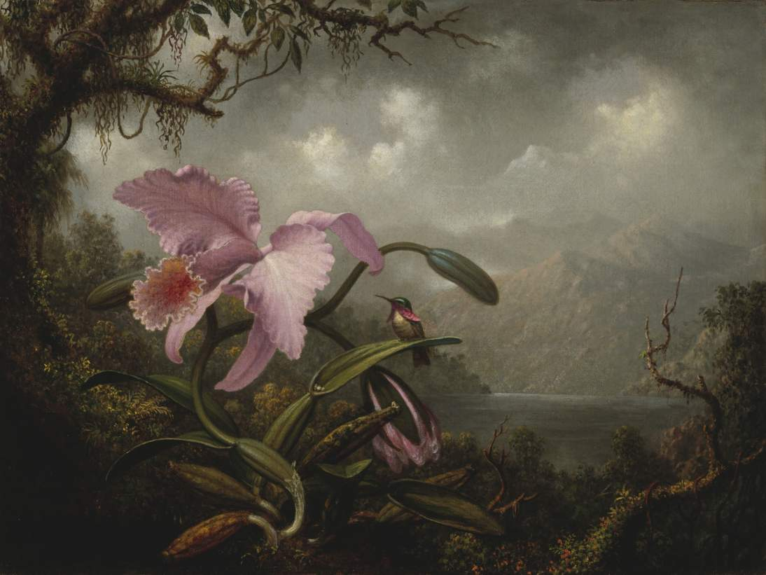 Martin Johnson Heade Orchid and Hummingbird ca. 1885