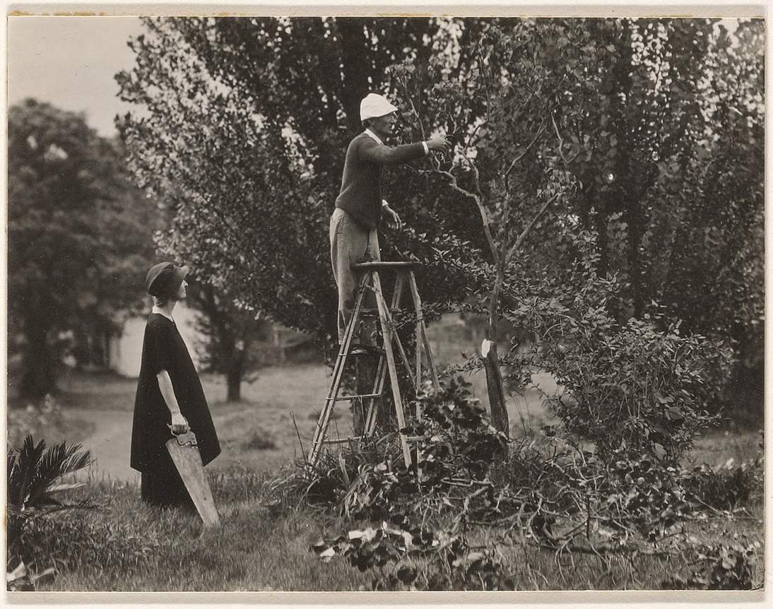 O'Keeffe and Davidson pruning in orchard