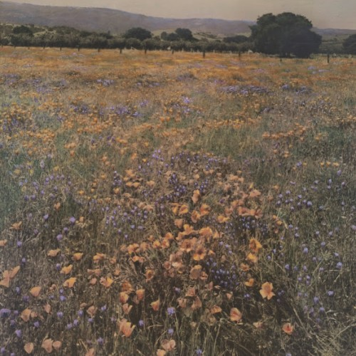 Willard E. Worden, <em>Poppies and Lupine</em,>, ca. 1915. Gelatin silver print with applied color. Collection of Bonnie Bell