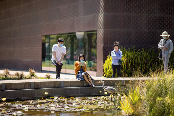 Visitors enjoy a serene view at the Pool of Enchantment outside of the de Young Museum.