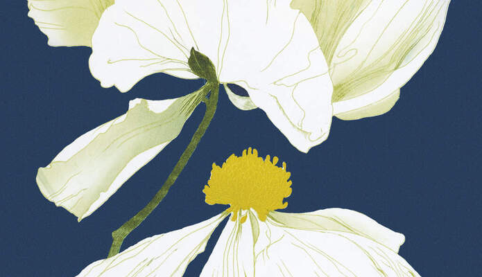 Beth Van Hoesen, Matilija Poppy, pl. 2 (detail), from the portfolio Poppies and Peony, 1976