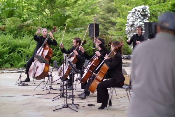 Violinists playing music